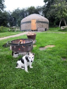 A yurt, a campfire and a dog