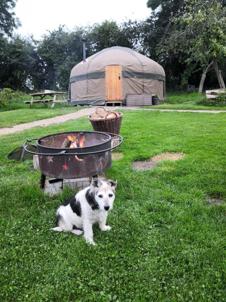 A yurt, a campfire and a dog